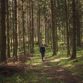 Skog-61.jpg